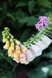 Όμορφη χλωρίδα λουλουδιών Στοκ φωτογραφίες με δικαίωμα ελεύθερης χρήσης