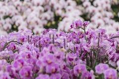 Όμορφη χλωρίδα Στοκ Εικόνες