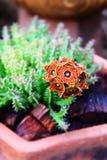 Όμορφη χλωρίδα Vrieseas λουλουδιών Στοκ Εικόνες