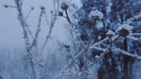 Όμορφη χλόη κάτω από το χιόνι απόθεμα βίντεο