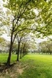 Όμορφη όψη πάρκων στοκ φωτογραφίες με δικαίωμα ελεύθερης χρήσης