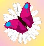 όμορφη camomile πεταλούδων πασχ&alph ελεύθερη απεικόνιση δικαιώματος