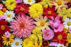 Όμορφη floral ανασκόπηση ανασκόπησης… με τα ζωηρόχρωμα λουλούδια Τοπ όψη Στοκ Εικόνα