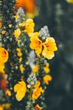 Όμορφη floral ανασκόπηση ανασκόπησης… με τα ζωηρόχρωμα λουλούδια Στοκ Φωτογραφία