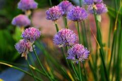 Όμορφη floral ανασκόπηση ανασκόπησης… με τα ζωηρόχρωμα λουλούδια Τρομερός παγετός λουλουδιών που ανθίζει στο τ Στοκ εικόνες με δικαίωμα ελεύθερης χρήσης