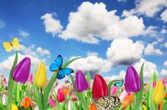 Όμορφη floral ανασκόπηση στοκ φωτογραφία