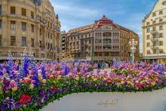 Όμορφη floral διακόσμηση σε Timisoara, Ρουμανία στοκ φωτογραφίες
