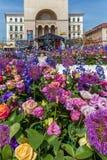 Όμορφη floral διακόσμηση σε Timisoara, Ρουμανία στοκ εικόνες