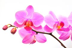 όμορφη orchid πορφύρα Στοκ φωτογραφίες με δικαίωμα ελεύθερης χρήσης