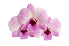 όμορφη orchid πορφύρα Στοκ Φωτογραφίες