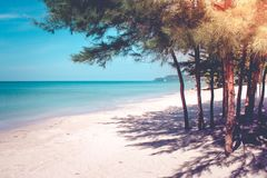 Όμορφη seascape άποψη των δέντρων πεύκων στην άσπρη παραλία άμμου στην ακτή με την μπλε θάλασσα και τον ουρανό στο υπόβαθρο Στοκ φωτογραφία με δικαίωμα ελεύθερης χρήσης