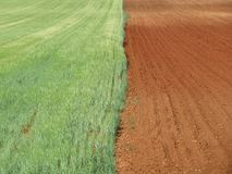 Όμορφοι αναμονή και ξηρός τομέων σιταριού που συγκομίζονται στοκ εικόνες