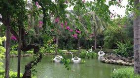 όμορφοι κήποι τροπικοί φιλμ μικρού μήκους