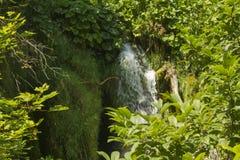 όμορφοι καταρράκτες καταρρακτών βλάστησης ρευμάτων φρέσκοι πράσινοι plitvice Στοκ φωτογραφία με δικαίωμα ελεύθερης χρήσης