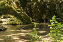 όμορφοι καταρράκτες καταρρακτών βλάστησης ρευμάτων φρέσκοι πράσινοι plitvice Στοκ Εικόνες
