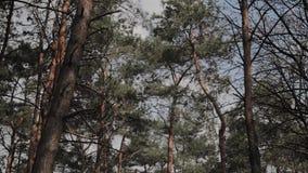 Όμορφοι κλάδοι δέντρων ενάντια στο μπλε ουρανό απόθεμα βίντεο
