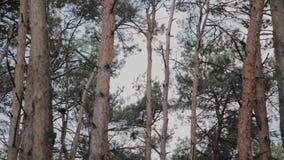 Όμορφοι κλάδοι δέντρων ενάντια στο μπλε ουρανό φιλμ μικρού μήκους