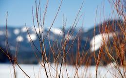 Όμορφοι κλάδοι στα μουτζουρωμένα ευρωπαϊκά όρη βουνών μια κρύα ημέρα το χειμώνα στοκ φωτογραφίες με δικαίωμα ελεύθερης χρήσης