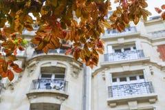 Όμορφοι κλάδοι του δέντρου άνοιξη ενάντια στην πρόσοψη ενός χαρακτηριστικού ol στοκ εικόνες