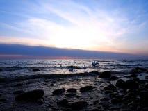 Όμορφοι κύκνοι στη θάλασσα της Βαλτικής στα χρώματα ηλιοβασιλέματος,  στοκ φωτογραφίες