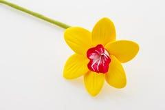όμορφοι νάρκισσοι κίτρινοι Στοκ εικόνες με δικαίωμα ελεύθερης χρήσης