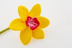 όμορφοι νάρκισσοι κίτρινοι Στοκ Εικόνες