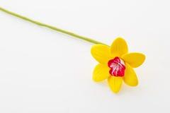 όμορφοι νάρκισσοι κίτρινοι Στοκ φωτογραφία με δικαίωμα ελεύθερης χρήσης