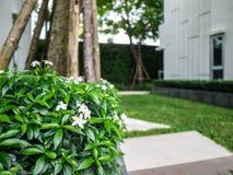 Όμορφοι λουλούδι και κήπος Στοκ φωτογραφία με δικαίωμα ελεύθερης χρήσης