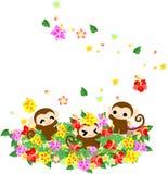 Όμορφοι πίθηκοι - κήπος λουλουδιών hibiscus- Στοκ φωτογραφία με δικαίωμα ελεύθερης χρήσης