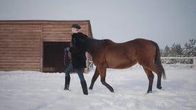 Όμορφοι περίπατοι κοριτσιών με το όμορφο άλογο στο χειμερινό αγρόκτημα στο χιόνι Νέα γυναίκα που οδηγεί το άλογό της υπαίθρια Ένν φιλμ μικρού μήκους