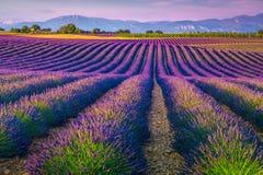 Όμορφοι πορφυροί lavender τομείς στην περιοχή της Προβηγκίας, Valensole, Γαλλία, Ευρώπη στοκ φωτογραφία με δικαίωμα ελεύθερης χρήσης