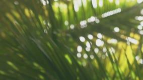 Όμορφοι πολύβλαστοι θάμνοι φοινικών στην ημέρα απόθεμα βίντεο