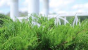 Όμορφοι πράσινοι θάμνοι κοντά στο gazebo στην ακτή της λίμνης Πράσινες περιοχές το καλοκαίρι στο πάρκο πόλεων φιλμ μικρού μήκους