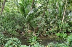Όμορφοι πράσινοι πυροβολισμοί τροπικών δασών στις διαφορετικές θέσεις στις Σεϋχέλλες στοκ εικόνες