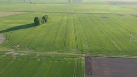 Όμορφοι πράσινοι τομείς λιβαδιών και συγκομιδών άνοιξη, εναέριοι απόθεμα βίντεο