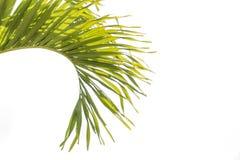 Όμορφοι πράσινοι φοίνικες στο beuatiful λαμπρό άσπρο υπόβαθρο στοκ εικόνες με δικαίωμα ελεύθερης χρήσης