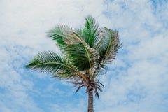 Όμορφοι φοίνικας καρύδων και μπλε ουρανός, στην καρδιά της Δομινικανής Δημοκρατίας, Puerto Plata Στοκ Εικόνες