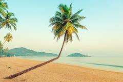 Όμορφοι φοίνικες καρύδων και τροπική παραλία στοκ φωτογραφία