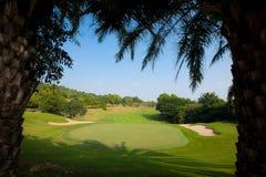 Όμορφοι φοίνικες στο γήπεδο του γκολφ. Στοκ εικόνα με δικαίωμα ελεύθερης χρήσης