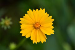 Όμορφος άγριος κόσμος λουλουδιών μια ηλιόλουστη θερινή ημέρα στοκ εικόνα