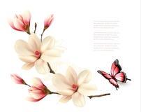 Όμορφος άσπρος κλάδος magnolia με μια πεταλούδα ελεύθερη απεικόνιση δικαιώματος