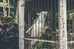 Όμορφος άσπρος παπαγάλος σε ένα κλουβί Στοκ Εικόνες