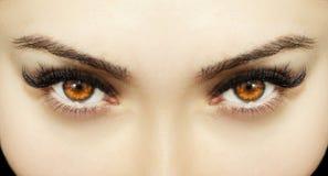 Όμορφος ένας οξυδερκής φαίνεται μάτια γυναικών Κλείστε αυξημένος στοκ εικόνα με δικαίωμα ελεύθερης χρήσης