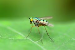 Όμορφος λίγη μύγα με το μαλακό υπόβαθρο Στοκ φωτογραφία με δικαίωμα ελεύθερης χρήσης