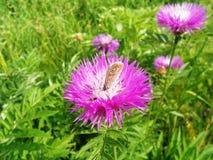 Όμορφος λίγη πεταλούδα Στοκ φωτογραφίες με δικαίωμα ελεύθερης χρήσης