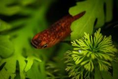 Όμορφος λίγο ψάρι Στοκ εικόνες με δικαίωμα ελεύθερης χρήσης