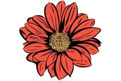 Όμορφος ανθίζοντας κήπος λουλουδιών Στοκ Φωτογραφίες