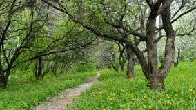 Όμορφος ανθίζοντας κήπος Apple-δέντρων Πτώση πετάλων στο έδαφος φιλμ μικρού μήκους