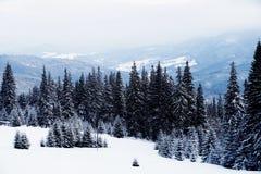 όμορφος δασικός χειμώνας Βουνό στον καπνό Καρπάθιο, Στοκ Εικόνες