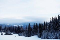 όμορφος δασικός χειμώνας Βουνό στον καπνό Καρπάθιο, Στοκ Φωτογραφία